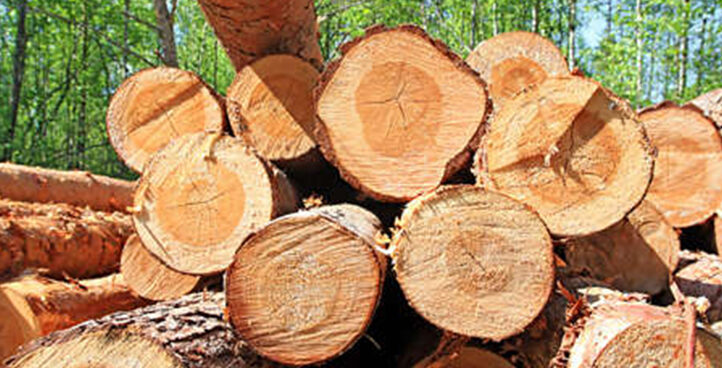 Wood and Agro-based